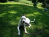 2012-05-20_hundetraining_46