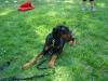 2012-05-20_hundetraining_50