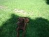 2012-05-20_hundetraining_54