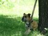 2012-05-20_hundetraining_62