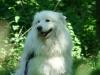 2012-05-20_hundetraining_74