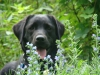 2012-07-22_hundetraining_003