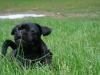2012-07-22_hundetraining_014