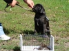 2012-07-22_hundetraining_032