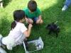 2012-07-22_hundetraining_036