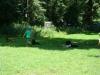 2012-07-22_hundetraining_081