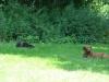 2012-07-22_hundetraining_087