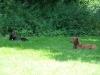2012-07-22_hundetraining_088