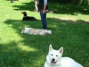 2012-07-22_hundetraining_092