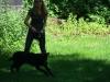 2012-07-22_hundetraining_098