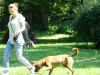 2012-07-22_hundetraining_138