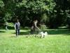 2012-07-22_hundetraining_142
