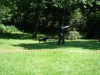 2012-07-22_hundetraining_150