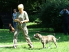 2012-07-22_hundetraining_153