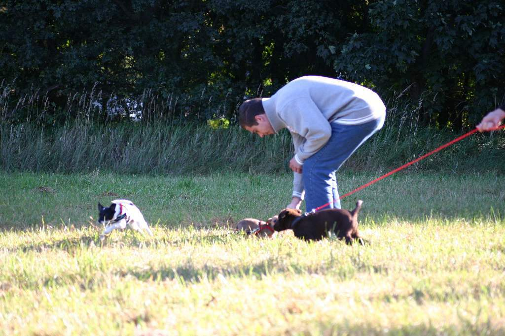2012-09-23_hundetraining_006