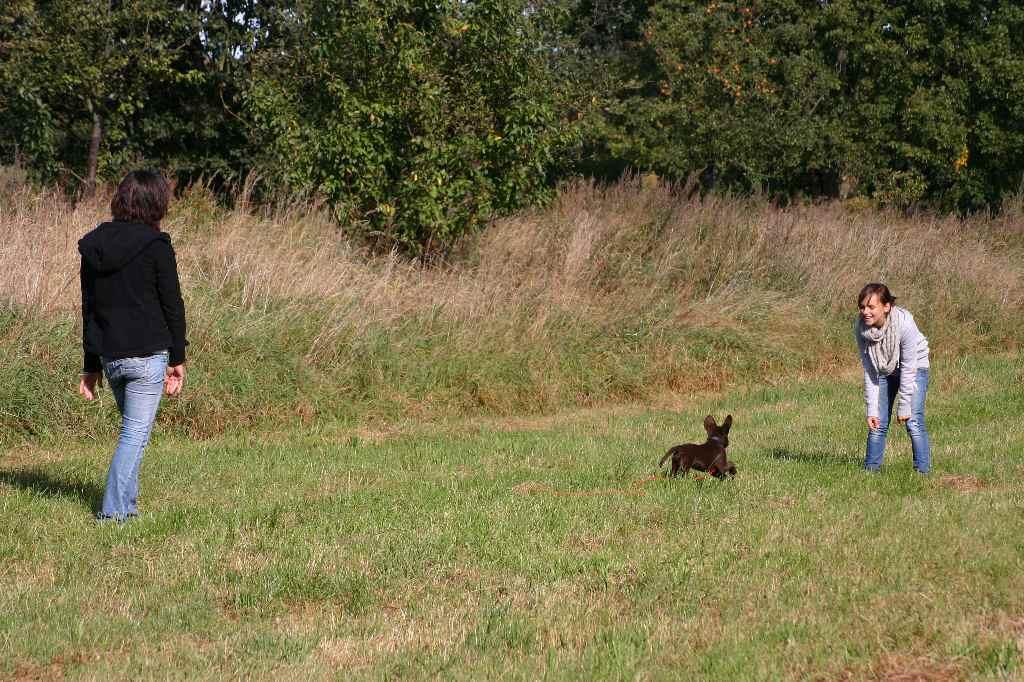 2012-09-23_hundetraining_027
