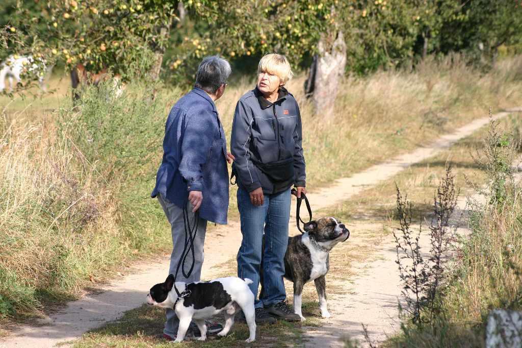 2012-09-23_hundetraining_028