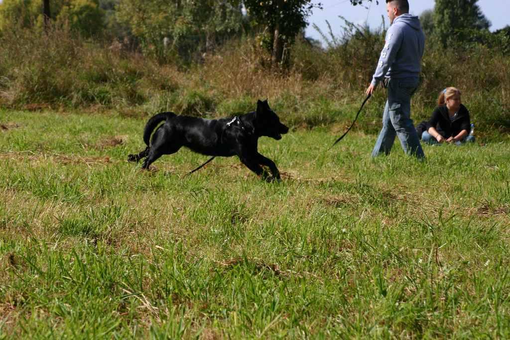 2012-09-23_hundetraining_078