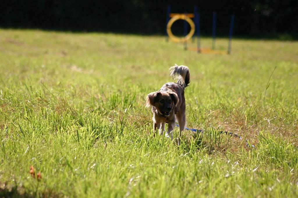 2012-09-23_hundetraining_086