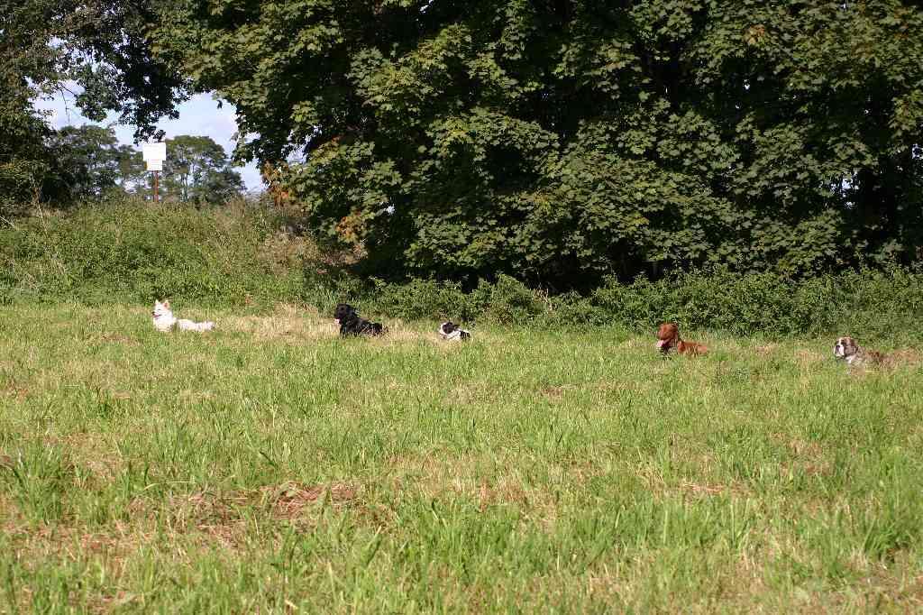 2012-09-23_hundetraining_091