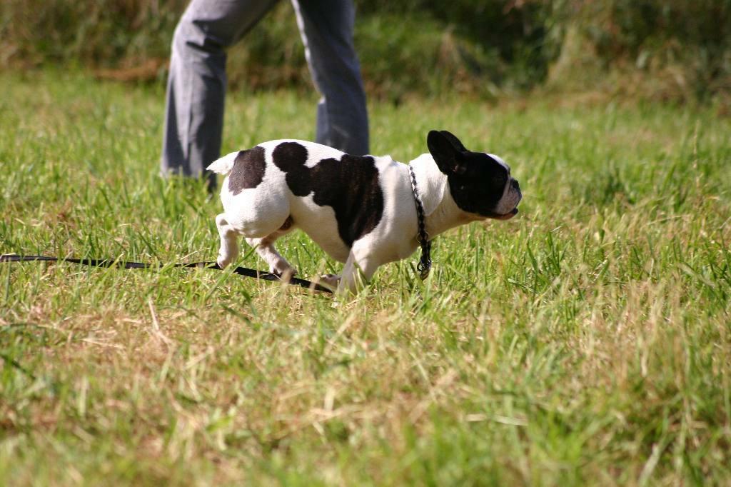 2012-09-23_hundetraining_106