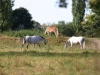 2012-09-23_hundetraining_054