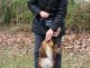 2012-11-25_hundetraining_21