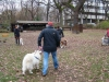 2012-11-25_hundetraining_28