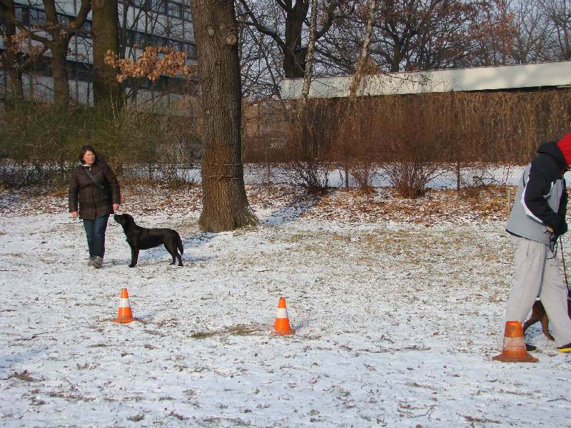 2012-01-29_hundetraining_04
