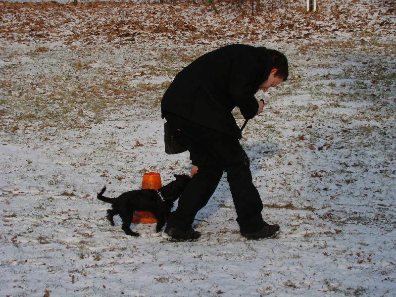 2012-01-29_hundetraining_08