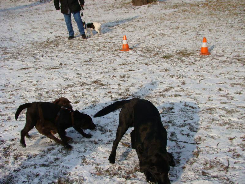 2012-01-29_hundetraining_14