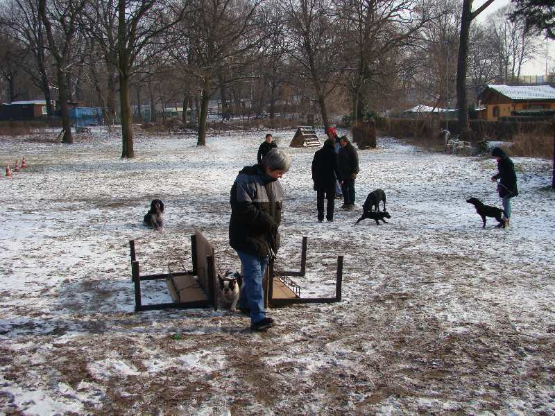 2012-01-29_hundetraining_18