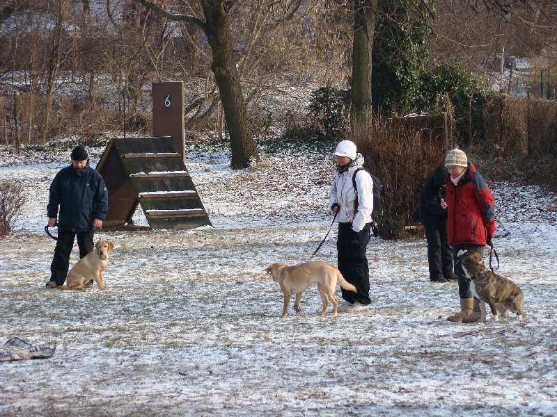 2012-01-29_hundetraining_34