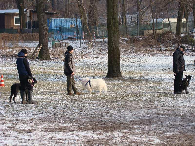 2012-01-29_hundetraining_35