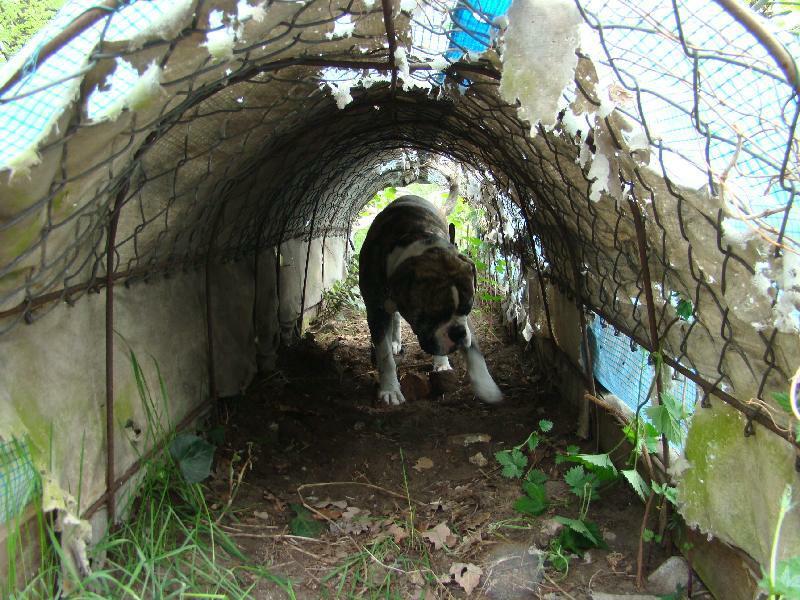 2012-04-29_hundetraining_092