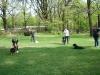 2012-04-29_hundetraining_002