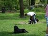 2012-04-29_hundetraining_007