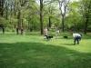 2012-04-29_hundetraining_017