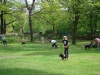 2012-04-29_hundetraining_021