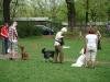 2012-04-29_hundetraining_034