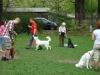 2012-04-29_hundetraining_037