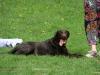 2012-04-29_hundetraining_057
