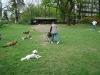 2012-04-29_hundetraining_077