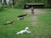 2012-04-29_hundetraining_078