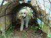 2012-04-29_hundetraining_091