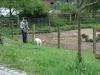 2012-05-06_hundetraining_030