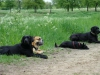 2012-05-06_hundetraining_124