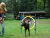 2012-07-29_hundetraining_15