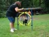 2012-07-29_hundetraining_17