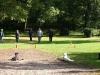 2012-09-30_hundetraining_35